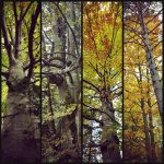 Herbstzeitlos
